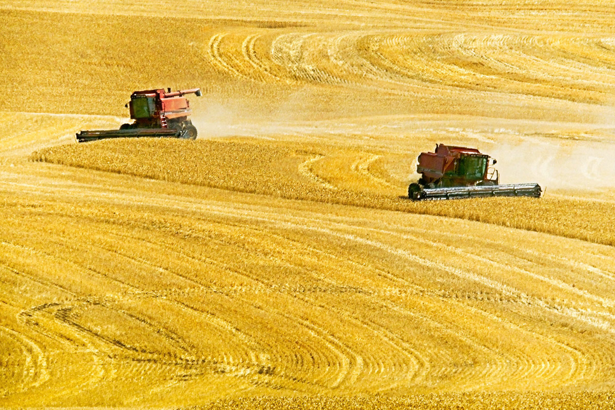 Wheat harvest in Oregon by Jim Choate